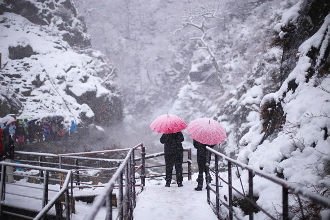 Umbrellas at the Japan Snow Monkeys - Nozawa Snow Report 22 December 2013