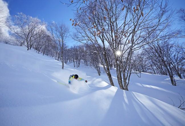 The Best Snow Is At Nozawa