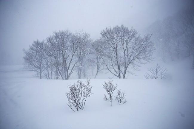 Ghostly trees somewhere in Nozawa.