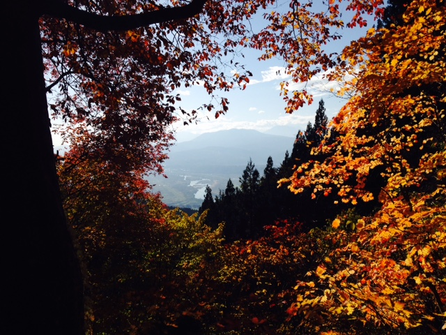Autumn in Nozawa is one of my favourite times of the year. Amazing colours and weather