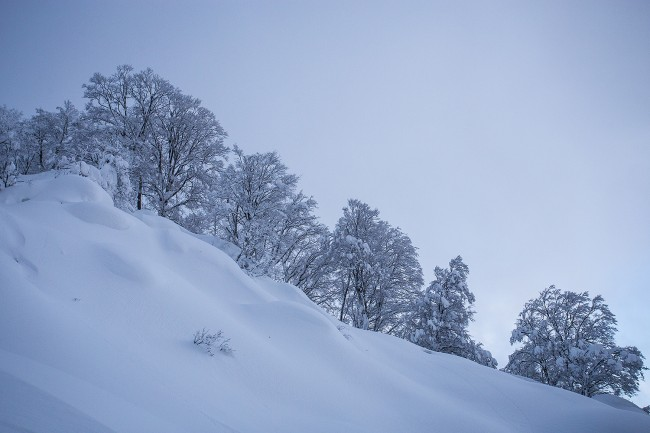 The undulating textures of an unridden slope.