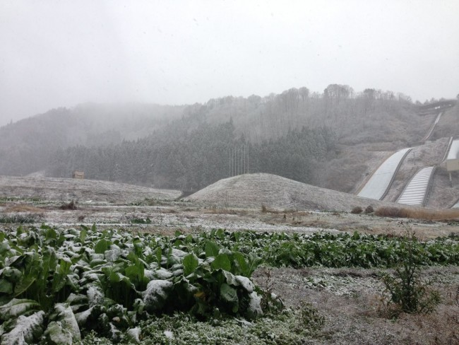 Have to get the Nozawa Na veggies in before they get buried under the Snow