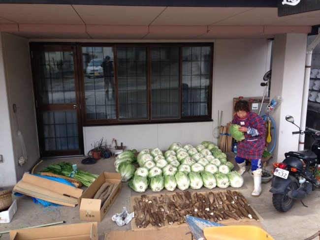Our neighbour Kazuko san bringing in some huge Hakusai before the snow hits in Nozawa