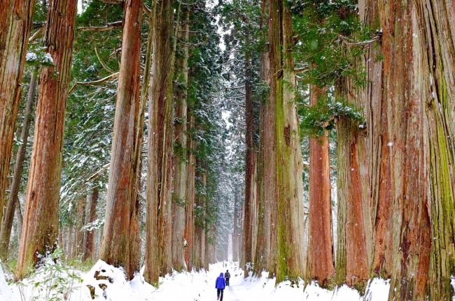 Hiking to Togakushi's Giant Cedar Trees in Nagano