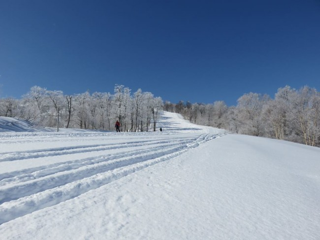 Fresh lines being drawn in Nozawa this morning! Photo by Nozawa Onsen Snow Resort