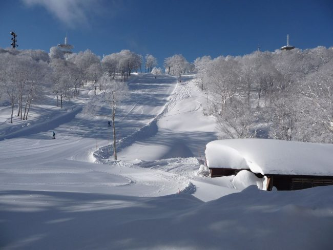 Mid January in Nozawa Onsen can be some amazing skiing but it is busy these days! Book early..