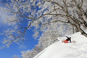Tree-Ski-Nozawa