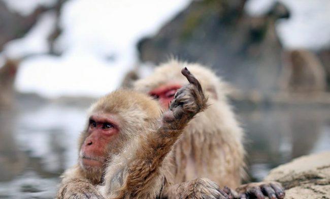 Nozawa Onsen Snow Monkey