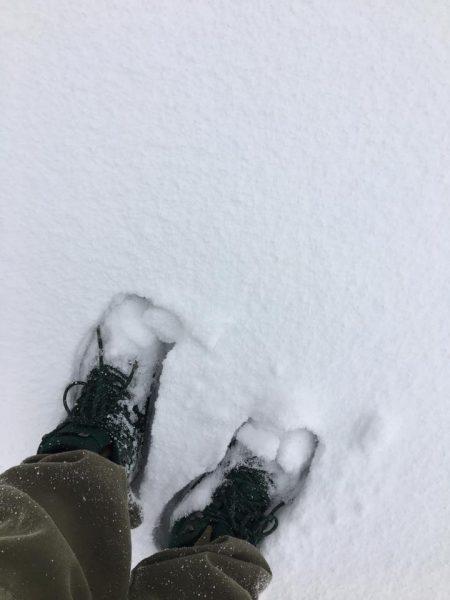 November Snow Nozawa