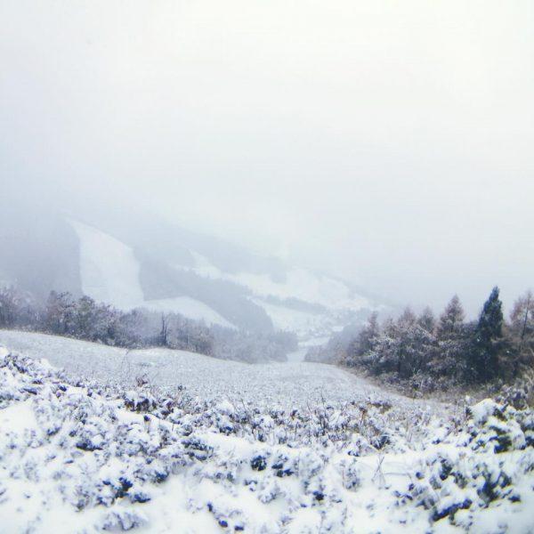 Snow Flakes First Snow Nozawa