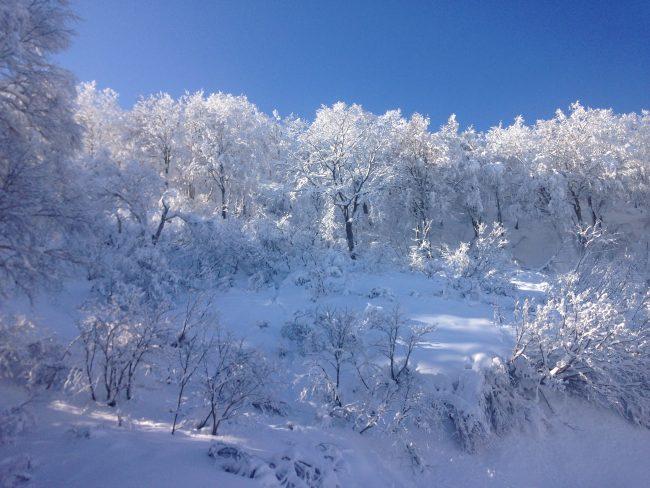 Fresh snow and clear skies this Nozawa Weekend