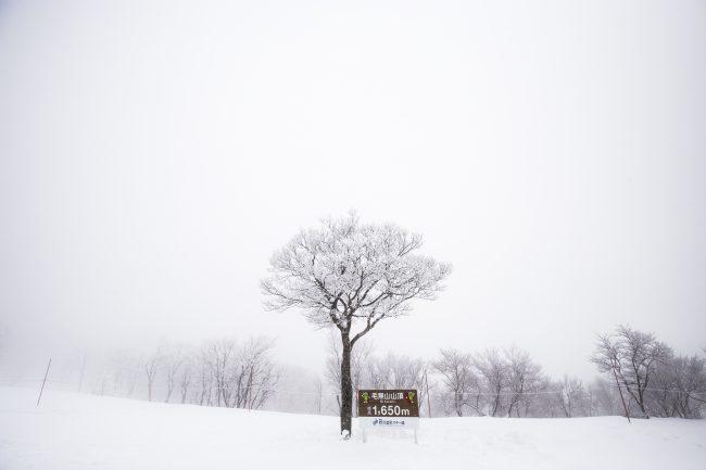 Nozawa Snow Report 30 January 2017