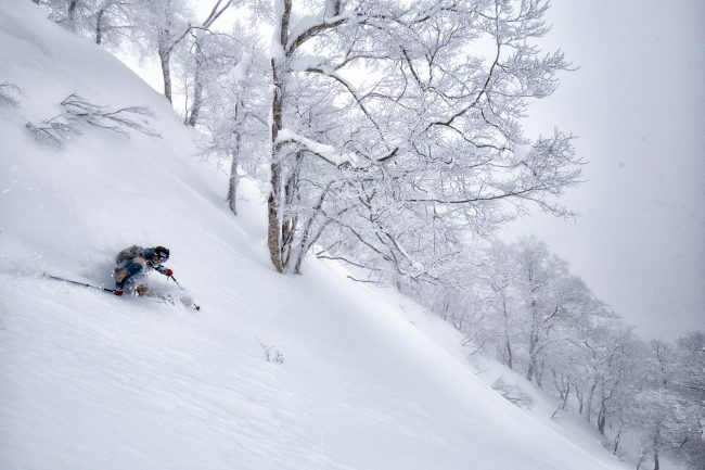 Nozawa Snow Report 24 January 2017
