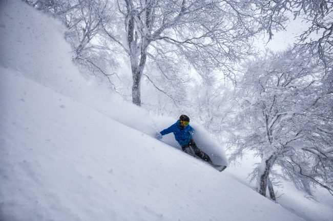Nozawa Snow Report 26 January 2017