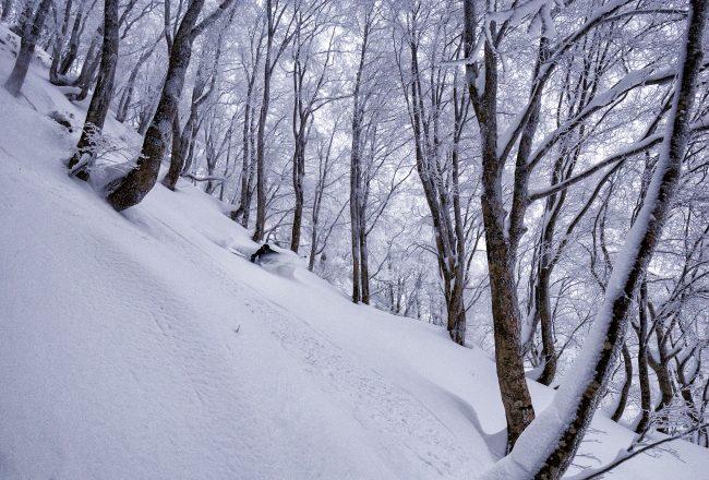 Nozawa Snow Report 7 January 2017