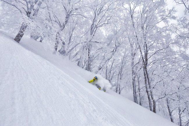 Nozawa Snow Report February 25