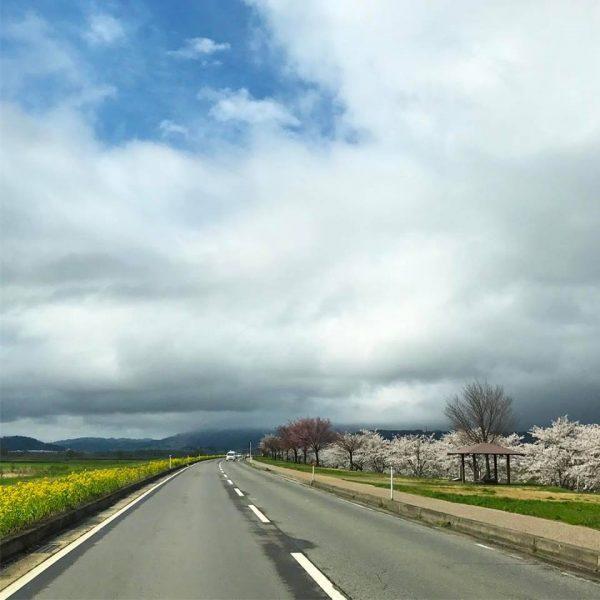 Nozawa Onsen Snow Report 25 April 2017