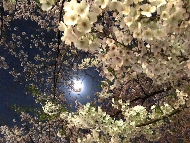 Happy Easter Nozawa Onsen