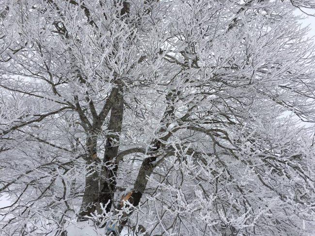 Nozawa Onsen Snow Report 1 April 2017
