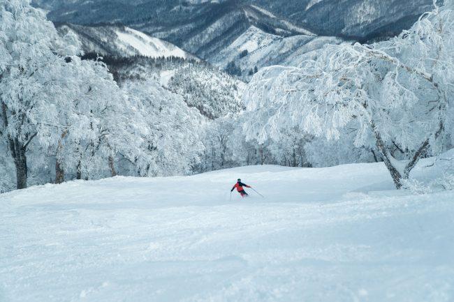 Nozawa Snow Report Saturday 6th January 2018