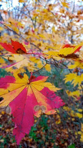 Autumn Travel Nozawa Japan