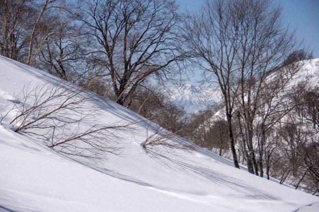 Nozawa Onsen Snow Report 19th March 2019