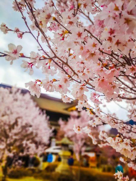 Nozawa Onsen spring