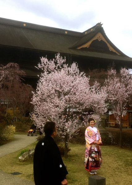 Cherry Blossoms bloom Nagano