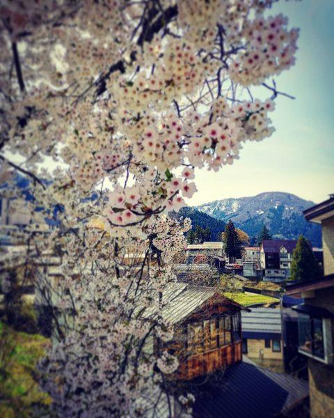 Flowers Japan Nozawa Nagano