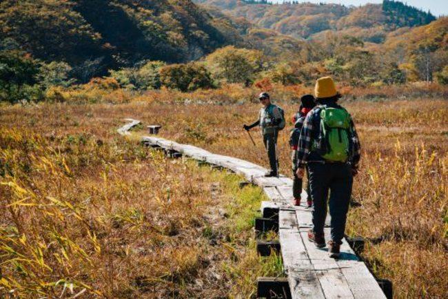 Shinetsu trail hike nozawa onsen Japan