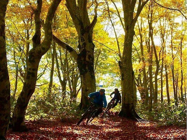 Mountain Bike forest tracks Fall colours Nozawa Onsen