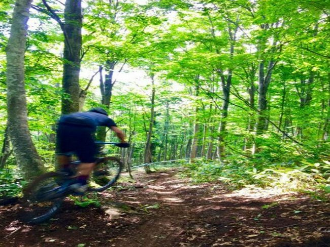 Airborne MTB Forest tracks Nozawa Onsen