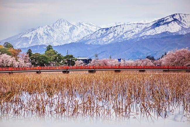 Ski Nozawa Onsen, Cherry Blossoms Japan