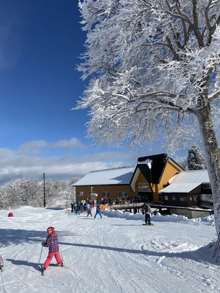Nozawa Snow Report 10th January 2020