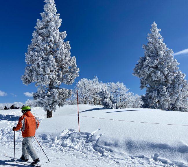 March Skiing Corona Nozawa