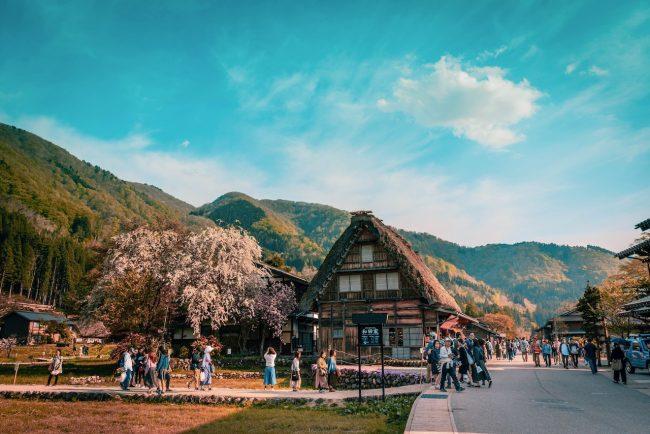 Cherry Blossoms Nozawa Japan