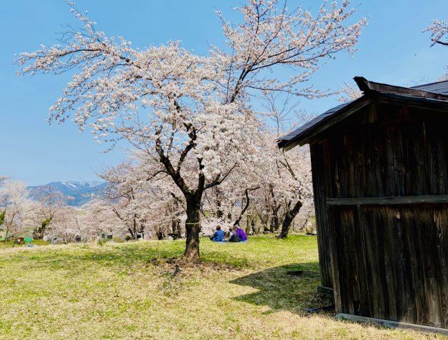 Best Place Cherry Blossom Nozawa Onsen