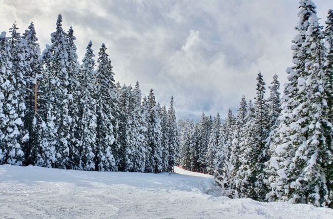 January Ski Nozawa Japan