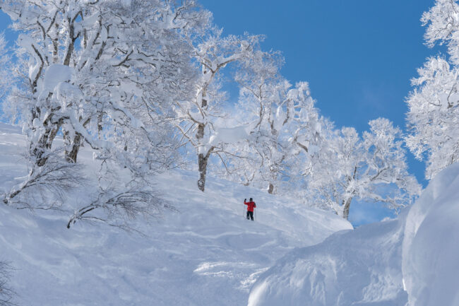 Bookings Open Nozawa Ski
